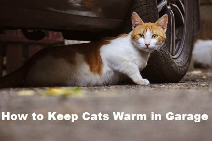 How to Keep Cats Warm in Garage
