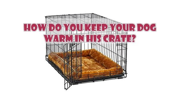 How to Keep a Dog Warm in a Crate 1